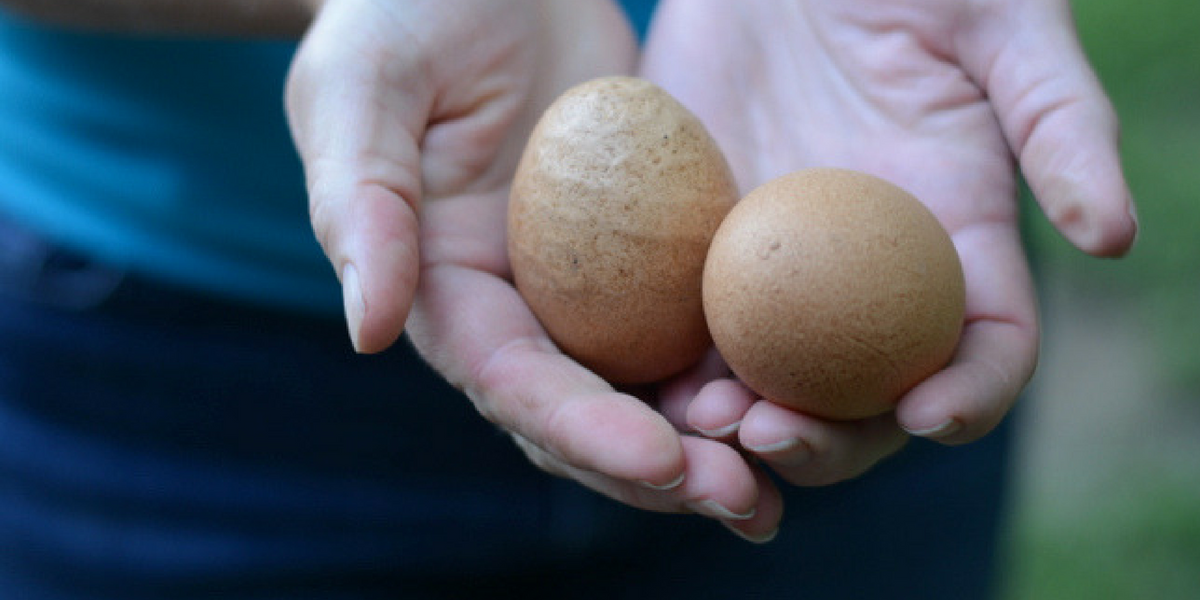 What Every Gardener Needs To Know About Egg Shells Soulyrested